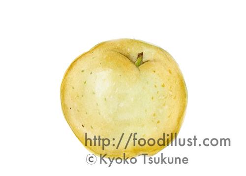 梨のイラスト(水彩画)【f02】
