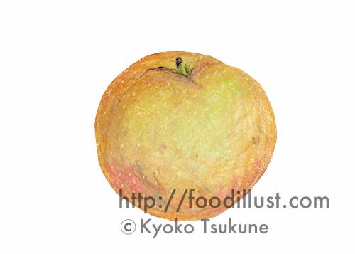 梨のイラスト(オイルパステル)【f03】